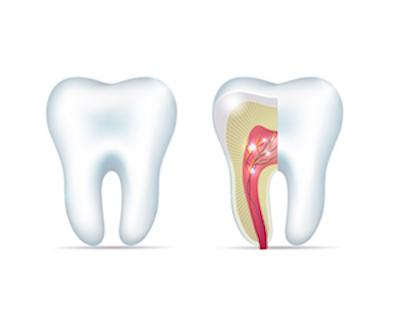 Side View of Illustrated Tooth and Root | Root Canal